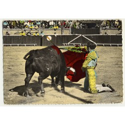 Torero & Bull In Bullfighting Arena (Vintage Colored Postcard)
