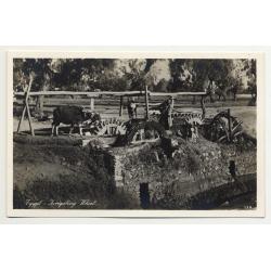 Lehnert & Landrock: Egypt - Irrigating Wheel (Vintage RPPC 1920s/1930s)