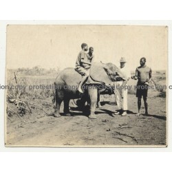 Native Congolese Guys Train Young Elephant / Steppe (Vintage Photo ~1940s/1950s)