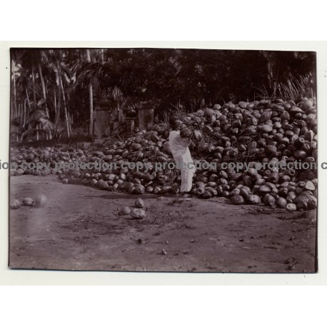 A.R.P. De Lord: Local In Front Of Mountain Of Coconuts - Zanzibar / Tanzania (Vintage Photo ~1920s/1930s)
