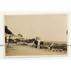 Katanga / Congo: Le Plateau de Biano / Donkey (Vintage Photo B/W 1931)