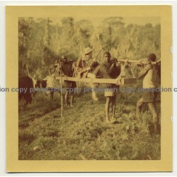 Congo: Colonial Hunter Gets Carried In Palanquin /Rifle (Vintage Photo 4.1.1954)