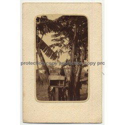 Congo: Monkey Sits On Wooden Cage / Banana Plants  (Vintage RPPC 39 Lavis B Canson)