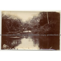 Congo / Africa: A Swim In River / Forest - Tree (Vintage Photo Sepia 1919)