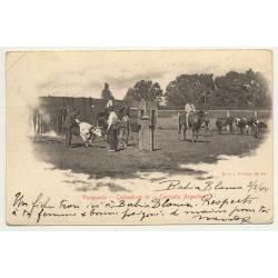 Argentina: Vacunando - Comstumbres De La Campaña Argentina (Vintage Postcard B/W 1904)