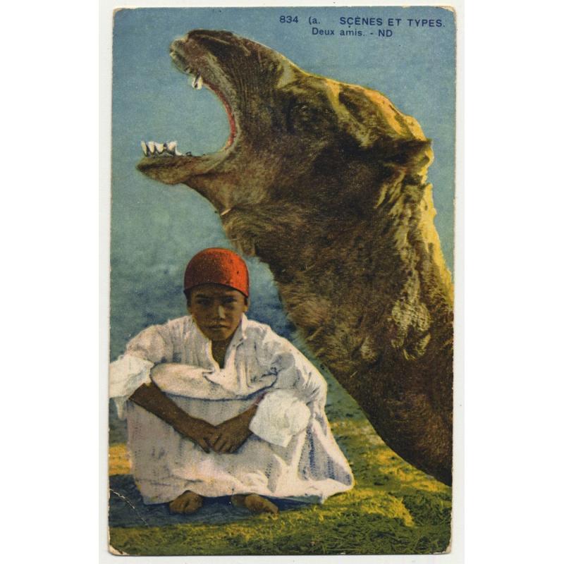 834 Scenes Et Types: Deux Amis / Camel & Young Bedouine (Vintage Postcard)