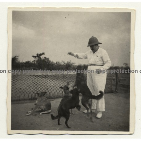 Congo Belge: Colonial Master Plays With His Dogs (Vintage Photo B/W ~1930s)
