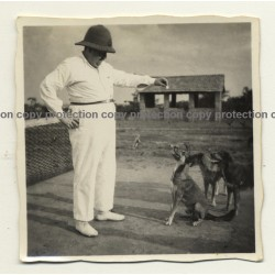 Congo Belge: Colonial Master Plays With His Dogs *2 (Vintage Photo B/W ~1930s)