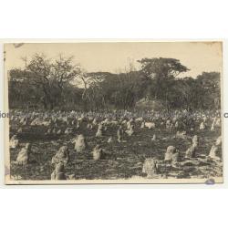 Congo Belge: Landscape With Termite Hills / Léopold Gabriel? (Vintage RPPC ~1920/1930s)