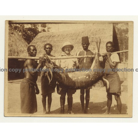 Congo-Belge: Proud Hunter & Natives With Shot Antelope (Vintage Sepia Photo 1920s/1930s)